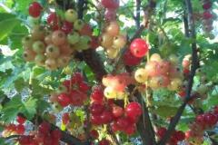 termények1