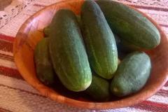 termények10