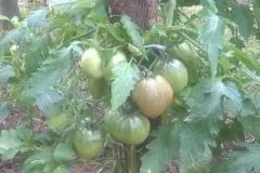termények5