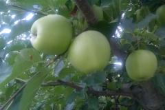 termények6