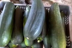 termények8